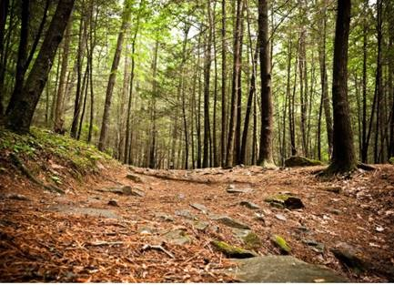 Five Must-Do Outdoor Experiences Around Great Sky